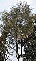 Tree I IMG 2819.jpg