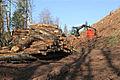 Tree felling in Idzholm Plantation - geograph.org.uk - 3451022.jpg