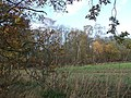 Trickley Coppice from Coppice Lane - geograph.org.uk - 285968.jpg