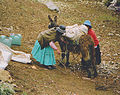 Two women and a donkey Ecuador.jpg