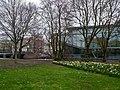 Urban trees in early spring, in city Amsterdam.jpg