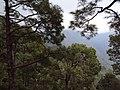 Vaishnodevi trail from Katra 39.JPG