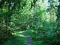 Vallaskogen sommar.jpg