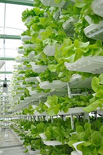 Vertical farming The practice of growing crops in vertically stacked layers