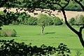 View Tree Horse.jpg