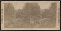 View in Central Park, from Robert N. Dennis collection of stereoscopic views 6.png