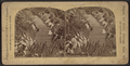 View in Prospect Park, from Robert N. Dennis collection of stereoscopic views 10.png