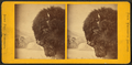 View of a buffalo head in front of a painted background, by Whitney's Gallery.png