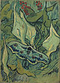 Vincent van Gogh - Emperor moth - Google Art Project.jpg