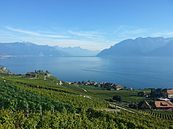 Vine Terraces of Lavaux and the Leman lake in Switzerland.jpg