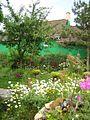 Virágoskert - Flower garden - panoramio.jpg