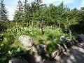 Vosges-Flore des forêts-Jardin d'altitude du Haut-Chitelet.JPG