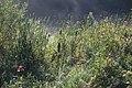 Wachtspaarbekken Bettelhovebeek 05.jpg