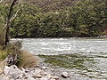 Waiau River shallows.jpg