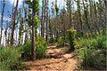 Walk up to Ella's Rock - panoramio (1).jpg
