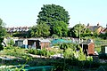 West Fields allotments - geograph.org.uk - 1341812.jpg