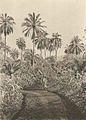 Westafrikanische Nutzpflanzen (Busse) - Tafel 26 - Ölpalmen.jpg
