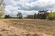 Wijnjeterper Schar, Natura 2000-gebied provincie Friesland 18.jpg