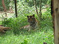 Wildlife Safari - 14.jpg