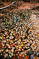 Wilket Creek in the autumn.jpg