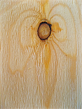 Wood - Wood knot in vertical section
