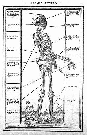 Simon de Colines - Woodcut from Estienne's De Dessectione