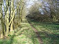 Woodland Bridleway, South-west of Shrewton - geograph.org.uk - 361511.jpg