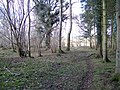 Woodland path, Pits Wood - geograph.org.uk - 1704192.jpg