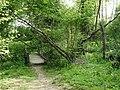 Woodland walk crosses the Horn Brook - geograph.org.uk - 424245.jpg