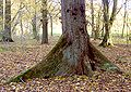 XN buttress root 526.jpg