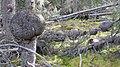 YT-7, Tagish, YT Y0B 1T0, Canada - panoramio.jpg
