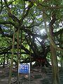 Yangshuo 02.jpg