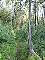 Yaroslavsky District, Yaroslavl Oblast, Russia - panoramio (107).jpg