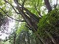 Yatsuomachi Odamou, Toyama, Toyama Prefecture 939-2455, Japan - panoramio (6).jpg