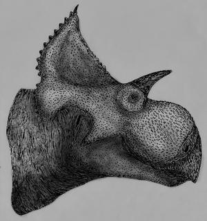 2017 in paleontology - Yehuecauhceratops
