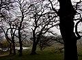 Zealand 2014-04-06 (13763442024).jpg