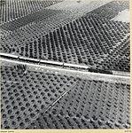 Zoltan Kluger. Orange Groves.jpg