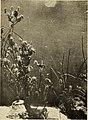 Zoological Society bulletin (1913) (14760274951).jpg