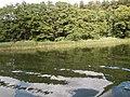+20180611Müritz-Nationalpark.Blick von der Müritz zum Nationalpark.-076.jpg