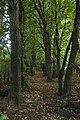 «Титусівський ліс» за ровами по периметру.jpg