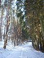 Část lesa a skála pod kopcem Kněžovec 01.jpg