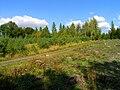Štíhlice, south Forest.jpg