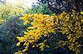 Ботанический сад, Минск - panoramio - sandexx (4).jpg
