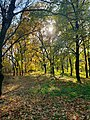 Ботанічний сад ДНУ м.Дніпро территорія.jpg