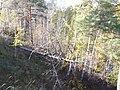 Долина р. Миасс (дер. Прохорово) - panoramio (10).jpg