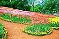 Клумбы с тюльпанами во время выставки тюльпанов.jpg
