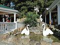 "Лебеди в кафе ""Тихая гавань"" - panoramio.jpg"