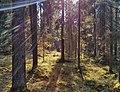 """Лесной массив """"Старая граница"""" 02.jpg"""