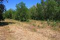 Лесопосадка - panoramio (3).jpg