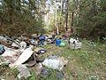 Лес в Уручье - panoramio.jpg